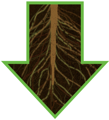 A DOWNWARD ARROW OF ROOTS